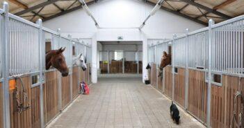 Der Pferdeeinstellungsvertrag: Muster und Vorlage