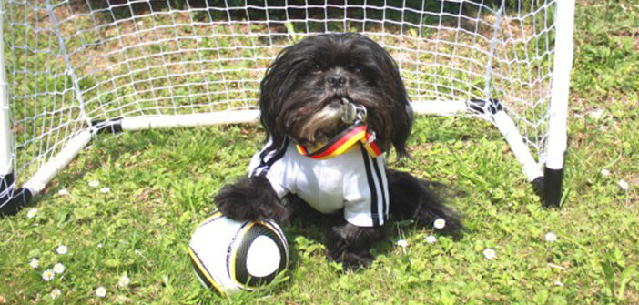 Hundemesse in der Tivoli Eissporthalle Aachen: 1000 Events für 4 Beine