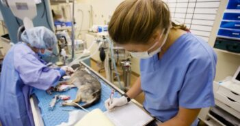 Operationen für Hunde und Katzen