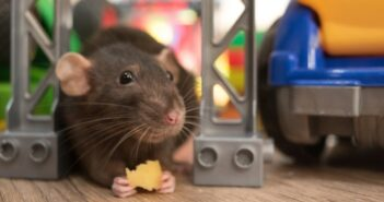 Ratten, Mäuse & Co