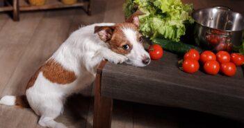 Vegetarische Hundeernährung