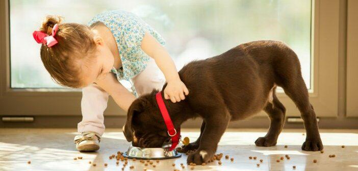 Getreidefreies Hundefutter: Wie es die Gesundheit des Hundes unterstützt