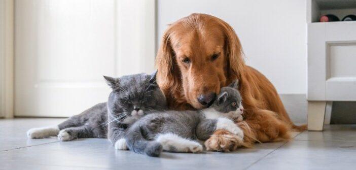 Artgerechte Haltung von Katzen: Gedanken zur Einzelkatzenhaltung