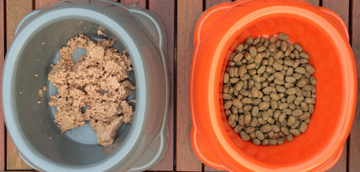 Hundefutter Test: Trockenfutter vs. Nassfutter