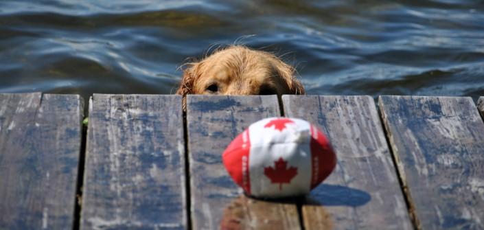 Mit Dem Hund Durch Kanada Im Home Car Von Edmund Kunke