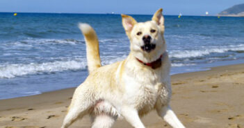 Hundestrände: die Schönsten an Nordsee, Ostsee, Gardasee und Adria