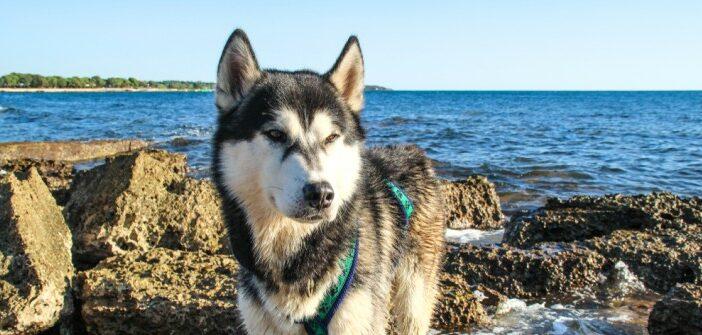 Hundeurlaub Adria: das musst Du beachten!