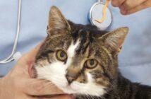 Zecken entfernen bei Hunden & Katzen