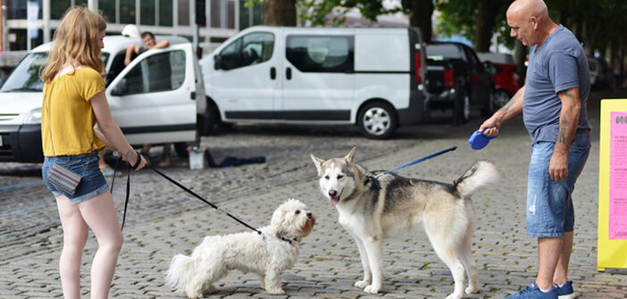 Hundeleine: die 15 besten Tipps aus Blogs (Blogparade)
