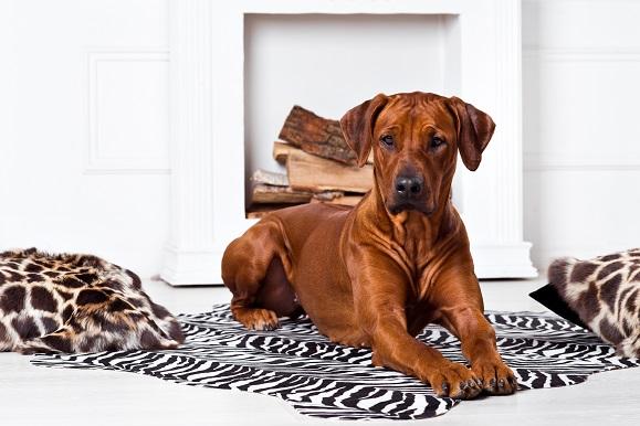 Die Engländer selbst beziehen sich gern auf ihren Adel. Ihre Hunde heißen oft Queen oder King.
