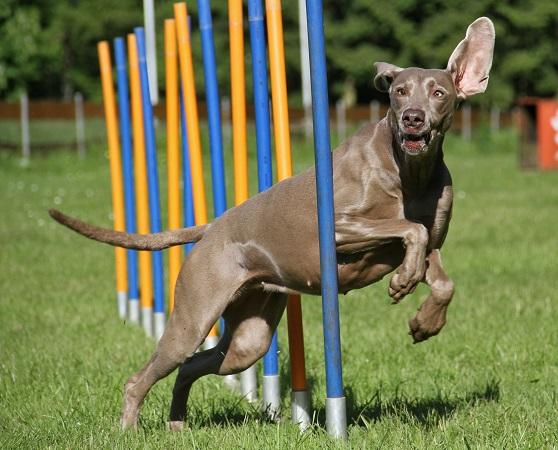 Wenn wir bei sehr sportlichen Hundenamen bleiben, müssen wir unbedingt noch Bullet nennen.