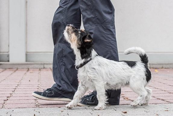Wenn eine Hundedame sehr ausgeglichen ist und sie nichts aus der Ruhe bringen kann, würden wir sie Easy nennen.