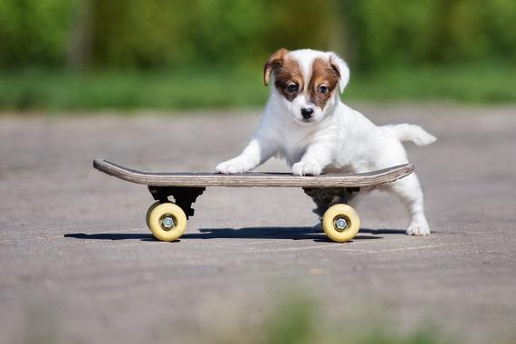 Wäre der englische Hundename Cosima nicht ideal für den Welpen? (#09)