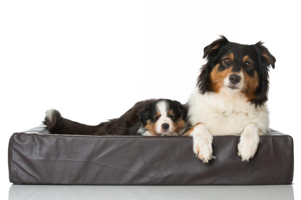 Hündin mit schlafendem Welpen im Hundebett. Ein Hundebett eignet sich gerade für kleine und mittlere Hunderassen. (#01)