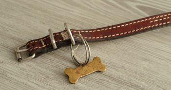 Hundehalsband: Leder, bestickt oder mit Strass?