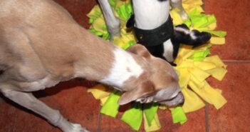 Intelligentes Hundespielzeug selbstgemacht