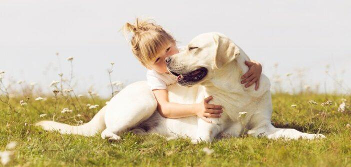 Labrador Retriever: Geduldiger, ausgeglichener Jagdhund und Familienhund