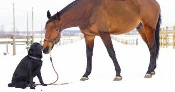 Merothische Hundeleine: Anleitung & Erfahrungen
