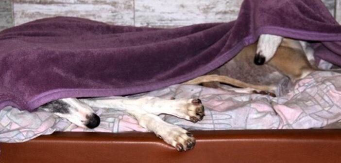 Orthopädisches Hundebett: Erfahrungen & ein kleiner Test