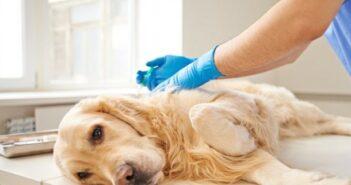Schmerzende Gelenke: Arthrose bei Hunden