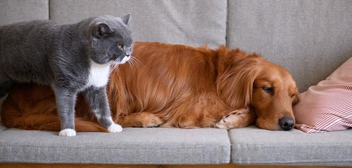 Tierhaare auf Polstermöbeln: Tipps und Tricks