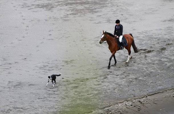Bild 1: Reiter und Hund am Strand unterwegs – was gibt es Schöneres