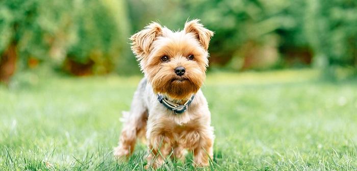 Kleine Hunderassen im Test: Die Top 10
