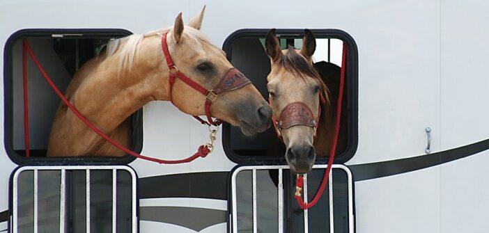 Pferdeanhänger: Haftpflicht und Teilkasko im Versicherungsschutz enthalten?