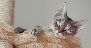 Katzenbaum: die 3 Besten