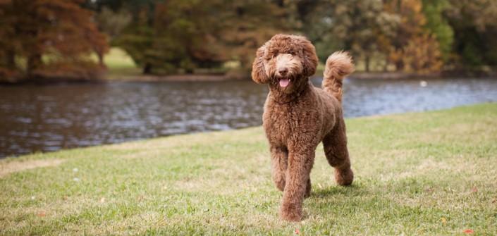 Liste hunde für allergiker Über 39