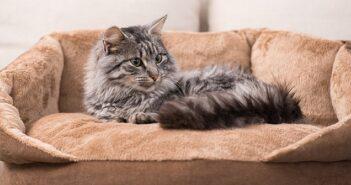 Katzennamen: 50 Namen für Katzen