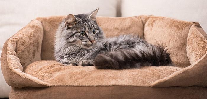 Katzennamen 50 Namen F 252 R Katzen