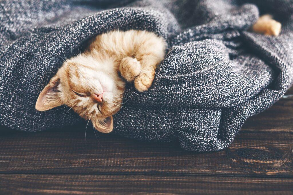 Katzennamen: Na was könnte denn zu der süßen passen?