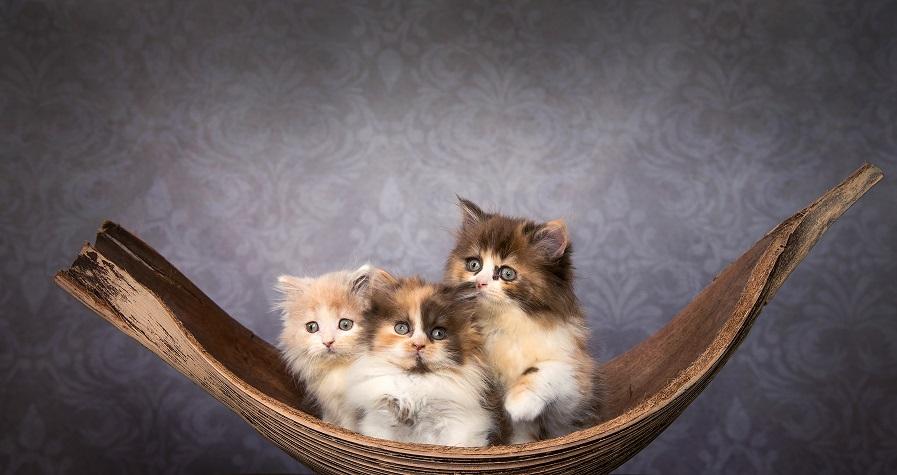 Na welche Namen sollen es für diese Drei werden?