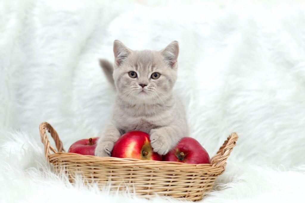 Katzennnamen für diese Süsse muss ein ganz besonderer werden