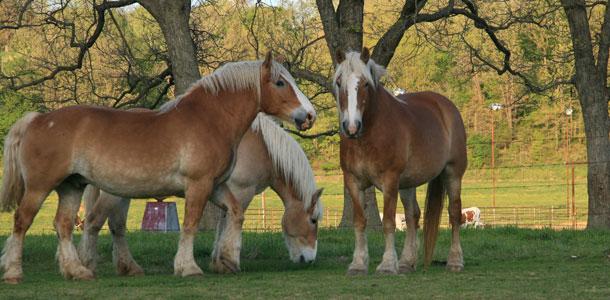 Pferdemüsli, Pferdefutter & Co.: die 11 wichtigsten Tipps zur Pferdeernährung