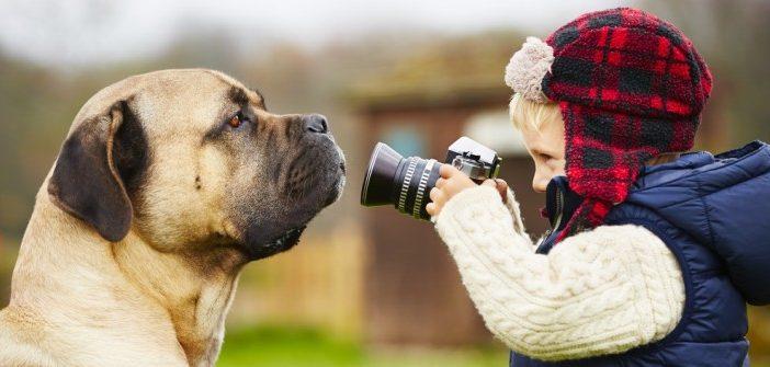 Hundefotografie: Erinnerungsfotos mit Bello