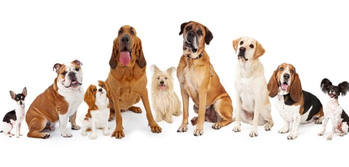 ZERGportal: Hundevermittlung im Internet