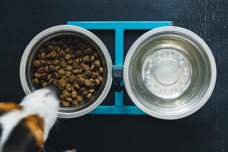 Plastik im Hundefutter: Kein Hersteller wird bewusst Plastik in seinem Futter verarbeiten. (#02)