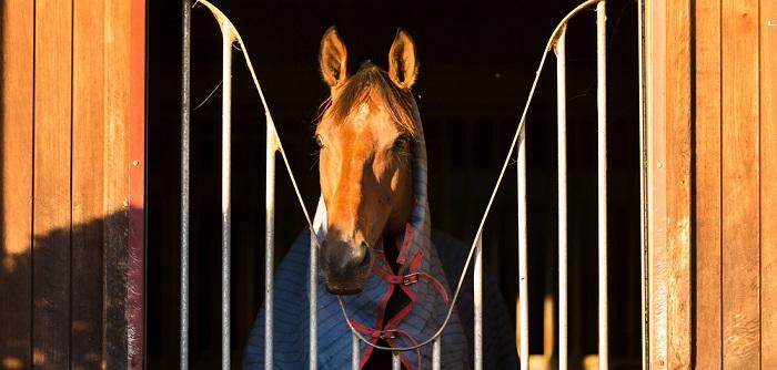 Gummimatte: Pferde brauchen einen sicheren Stand