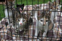 Tierheim Weinheim: Rettung für traurige Katzenschicksale