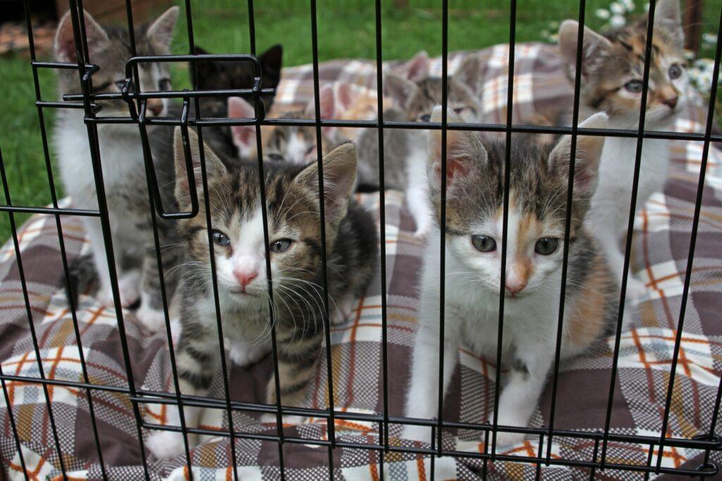 Katzenbabys in einerm Käfig Alltag im Tierheim