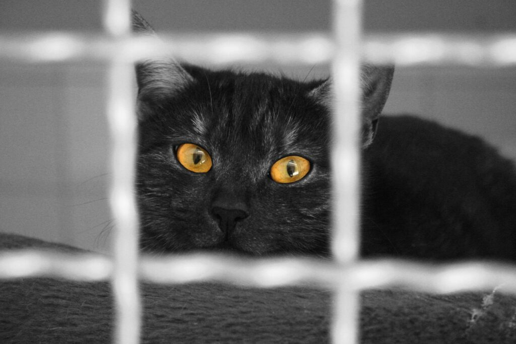 Gefangen hinter Gitter, das sollte so ein süsses Kätzchen doch nicht sein