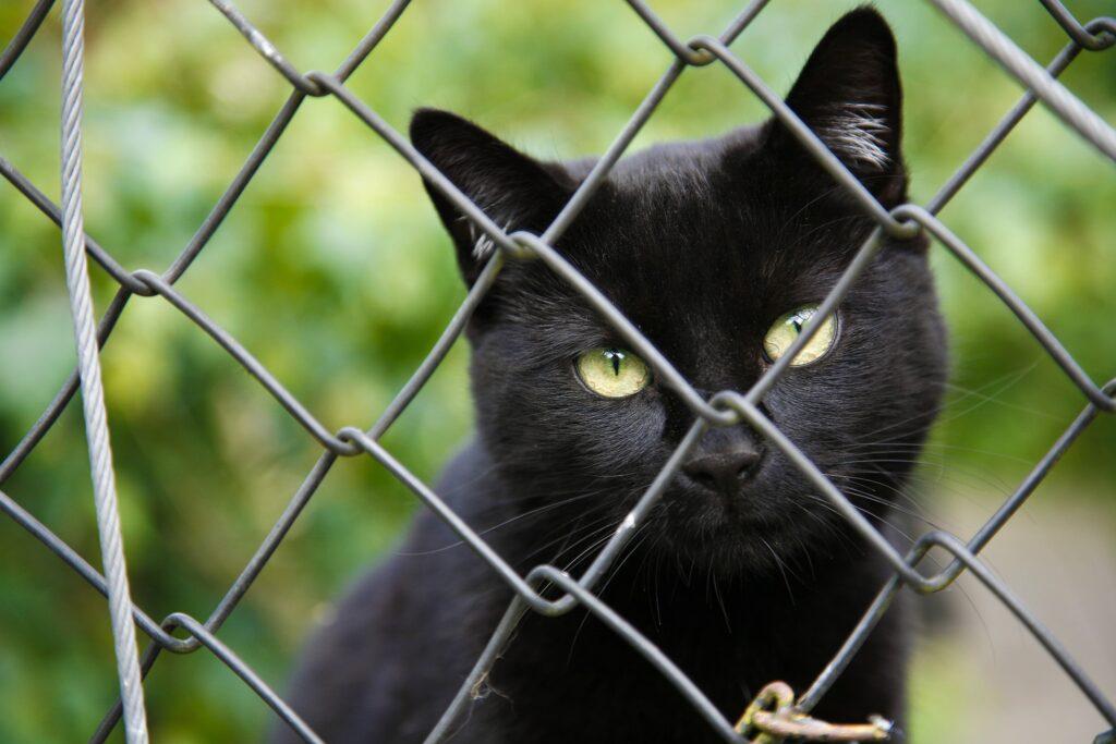 Hinter Gittern sollte doch kein tier sein Leben fristen müssen