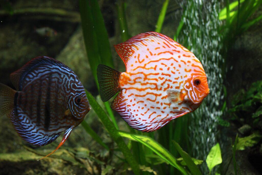 Süsswasserfische jeder auf seine Art einzigartig