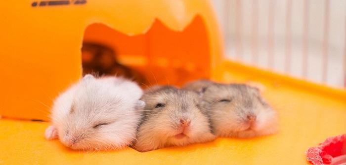 Hamster für Kinder: Hamster richtig halten