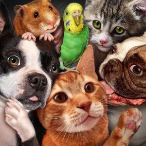 Es muss nicht immer nur ein Haustier sein, es gehen auch unterschiedliche Rassen