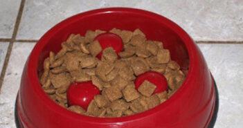 Ratgeber: Welche Inhaltsstoffe gibt es im Hundefutter?