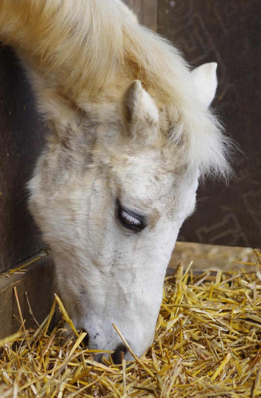 pferd impfen kosten