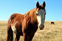 Cushing Syndrom beim Pferd: Symptome, Behandlung & Kosten